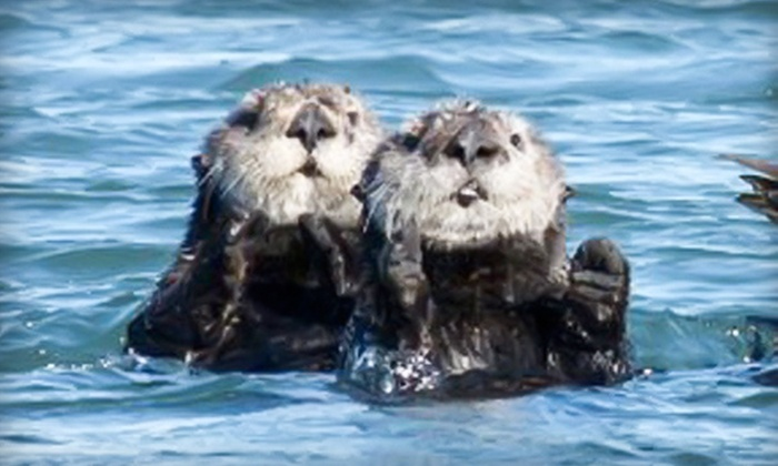 Blue Water Ventures - Moss Landing: $40 for a Guided Kayak Tour of Elkhorn Slough from Blue Water Ventures (Up to $80 Value)