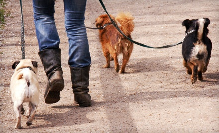 Five Dog Walks for One Dog (a $25 value) - Canine Journeys in
