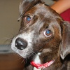 $10 Donation to Fund Supply Kits for Foster Pets