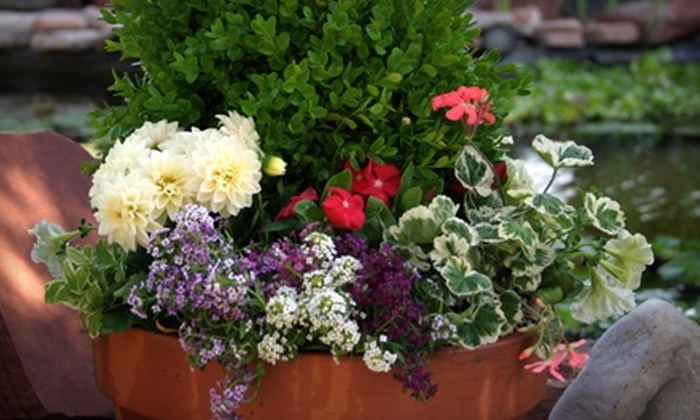 Cactus & Tropicals - Multiple Locations: $10 For $20 Worth of Plants and Gardening Products at Cactus & Tropicals