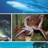 52% Off Admission to Underwater Adventures