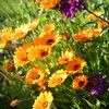$10 for Plants and Flowers in Grimsby