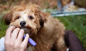 Sesión de peluquería para 1 perro de hasta 6 o 15 kg desde 16,95 € en Petspa