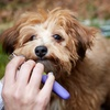 Up to 52% Off Pet Grooming