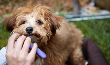 Pet Grooming, Dog or Cat Boarding, or Doggie Day Camp at Pet Suites (Up to 60% Off). Nine Options Available.
