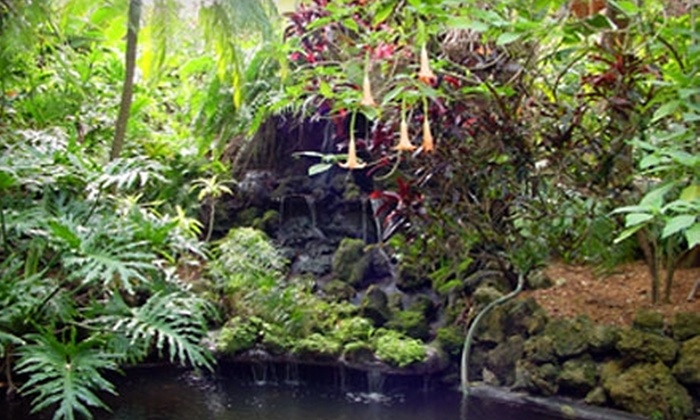 Sunken Gardens - St. Petersburg: Two Adult Admissions or an Annual Family Membership to Sunken Gardens in St. Petersburg