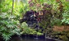 Sunken Gardens US - St. Petersburg: Two Adult Admissions or an Annual Family Membership to Sunken Gardens in St. Petersburg