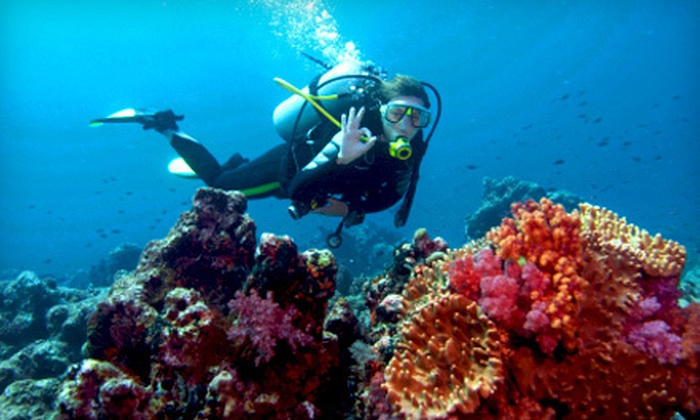 Benthic Scuba Center - Forest Glade: Three-Hour Introductory Indoor Scuba-Diving Class for One or Two at Benthic Scuba Center (Up to 65% Off)