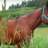 53% Off Horseback Trail Rides in Scio