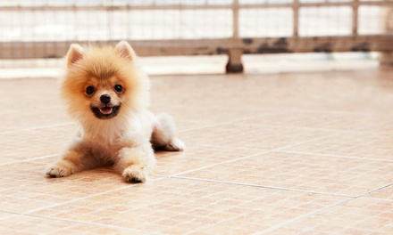 Haircut and Spa Package for One Dog or Three Days of Daycare at Nathalie's Thrifty Pet Salon & Boutique (Up to 52% Off)