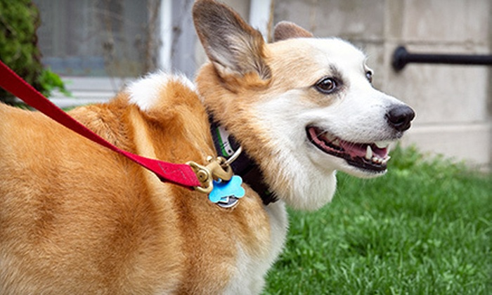 Pet Planet LLC - Green: Five Days of Dog Daycare, Five Nights of Dog Boarding, or Six Nights of Cat Boarding at Pet Planet LLC (51% Off)