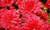 Garden Gate Nursery - Delafield: $15 for $30 Worth of Spring Plants and Garden Accessories at Garden Gate Nursery in Hartland