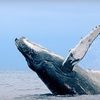 Up to 53% Off Whale Watching in Wildwood Crest