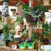 Half Off Garden Supplies in Ridgeway