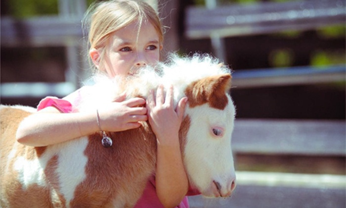 Sweet Meadow Farm - Sherborn: Three Pony Rides, Exotic Animal Adventure, or Mini-Riders Mommy and Me Class at Sweet Meadow Farm (Half Off)