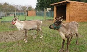 Ventura Wildlife: Reindeer or Alpaca Meet-and-Greet with Optional Trek for Two at Ventura Wildlife (Up to 43% Off)