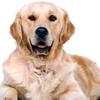 Up to 65% Off Dog Behavior Training