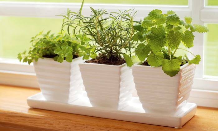 Penpoint Events - Culbertson East Highland: $23 for $45 Worth of Plants — PenPoint Events
