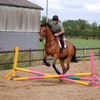 Up to 52% Off Horseback Riding at Hasty Acres Stables