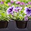 Up to 47% Off Plants & Gardening Supplies at Sunshine Gardens