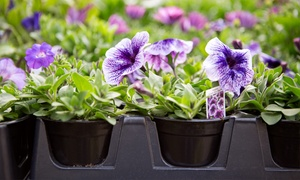 $19 For $30 Worth Of Plants And Gardening Supplies At Bristol