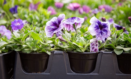 $19 for $30 Worth of Plants and Gardening Supplies at Bristol's Garden Center