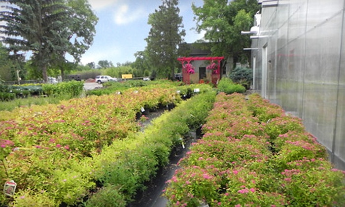 Cannor Nurseries - Spruce Grove: $25 for $50 Worth of Trees, Shrubs, and Plants at Cannor Nurseries