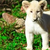 Animal World & Snake Farm Zoo – Up to 56% Off Visit or Party