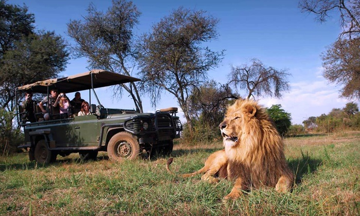 South African City Trip and Safari with Airfare - Mpumalanga: 11-Day, 8-Night South Africa Trip with Hotel Accommodation, Tours, and Round-Trip Airfare