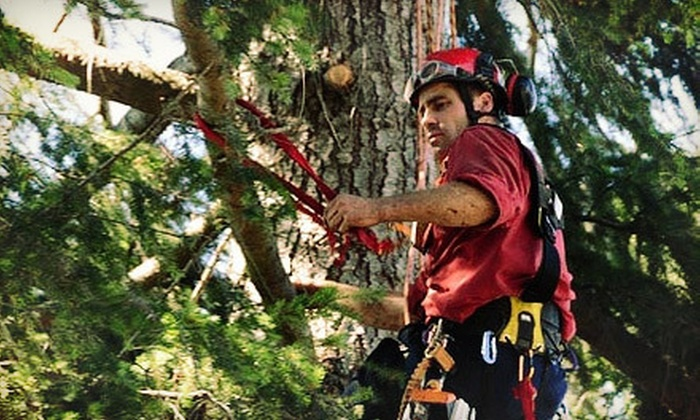 Scotty Tree & Arborist - Sidney: Three or Six Man-Hours of Tree-Trimming Services from Scotty Tree & Arborist (Up to 56% Off)