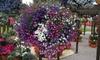 Lobelia 'Cascade Improved Mixed'