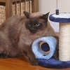 Interactive Sisal Scratching Post for Cats