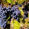 50% Off Limousine Wine Tour