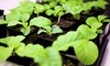 365 Hydro Design - Los Angeles: Hydroponics System with One or Two Months of Maintenance from 365 Hydro Design (Up to 65% Off)