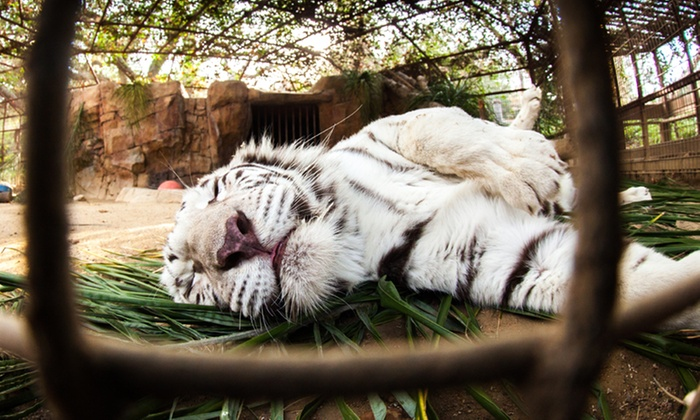 Rancho Las Lomas Wildlife Foundation - Irvine-Lake Forest: Movie Night Amongst the Wildlife for Two or Four at Rancho Las Lomas Wildlife Foundation (Up to 51% Off)