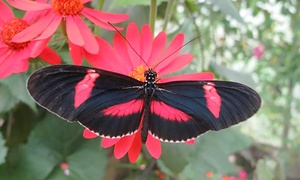 North Somerset Butterfly House: Entry for Two or a Family to North Somerset Butterfly House (Up to 36% Off)