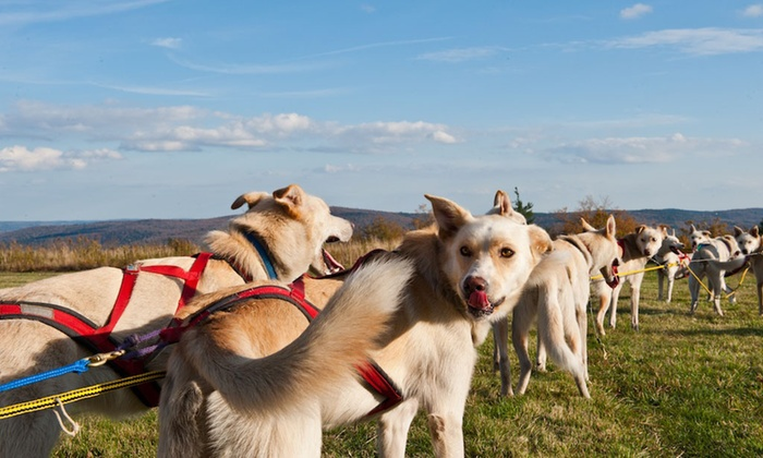 Hilltown Wilderness Adventures - DAR State Forest: Three-Hour Dogsled Adventure for One or Two at Hilltown Wilderness Adventures (Up to 68% Off)