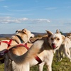 Up to 68% Off Alaskan Dog Adventure