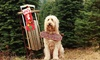 Pollard Ranch - Pollard Ranch: $14 for Christmas Tree Experience for Up to Six at Pollard Ranch ($26 Value)