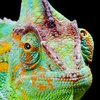 Up to 58% Entry to the Portland Metro Reptile Expo