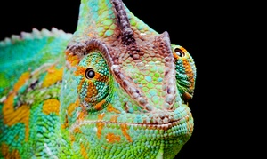 Northwest Reptile Expos: Entry for Two or Four Adults, or Two Adults and Two Kids to the Seattle Metro Reptile Expo (Up to 54% Off)
