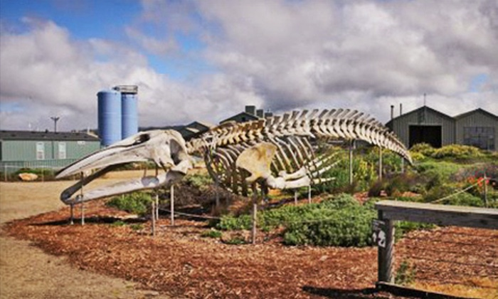 Seymour Marine Discovery Center - Westside: Seymour Marine Discovery Center Visit for Two or Four (Up to Half Off)