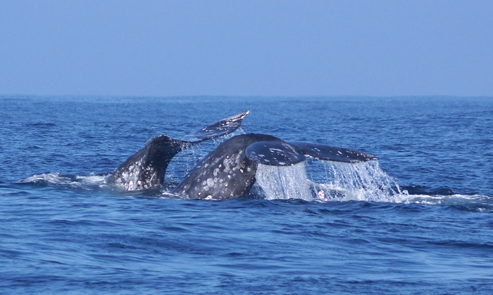 Randy's Fishing and Whale Watching Trips - Randy's Fishing Trips and Whale Watching: $29 for a Three-Hour Whale-Watching Expedition with Randy's Fishing and Whale Watching Trips ($40 Value)