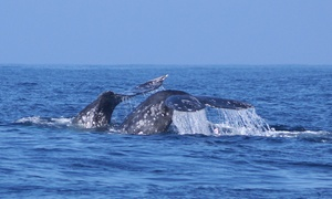 Randy's Fishing and Whale Watching Trips: $29 for a Three-Hour Whale-Watching Expedition with Randy's Fishing and Whale Watching Trips ($40 Value)