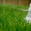 Up to 57% Off Pet-Waste Removal from Pet Butler