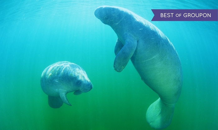 Manatee Tour and Dive - Crystal River: $30 for a Manatee Tour & Snorkel-Equipment Rental for One Adult from Manatee Tour and Snorkel ($49 Value)