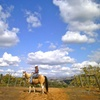 Half Off Horseback Riding and Wine Tasting