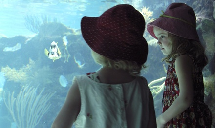 Discovery Adventure or Insanity Tour for Two, Adoption Package, or Membership at World Aquarium (Up to 71% Off)