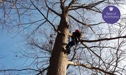 Two-Hour Tree-Climbing Adventure for One or Two from Riverside Outfitters (Up to 50% Off)