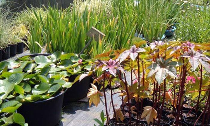 Blooms-N-More Nursery - Beavercreek: $25 Worth of Fruits, Veggies, and Plants